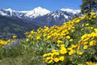 View of Mt. Cashmere and spring flowers from the surrounding hillside